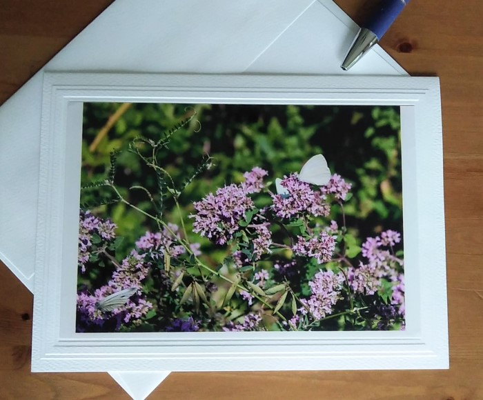 photograph of butterflies and purple flowers by doris lovadina-lee on blank note cards