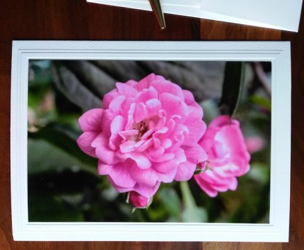 greeting card for birthday wishes pink roses