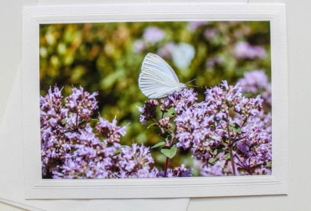 fine art photo butterfly purple flowers blank greeting card