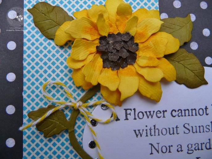 SG Feb bp sunflower closeup 1a  P1070645