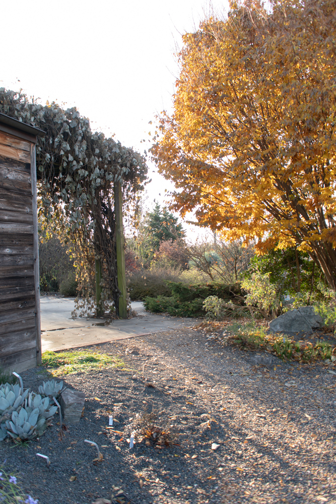 JC Raulston Arboretum | Photo by Michelle Smith, Gather Goods Co