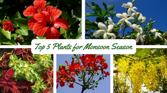 Monsoon The Best Time To Grow These 5 Garden Plants In India