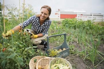 Giardinaggio & Frutticoltura