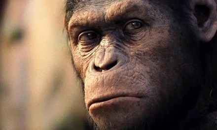 ¿Por qué nos miran los animales? (a propósito de Rise of the Planet of Apes)
