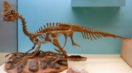 Oviraptor (credit: Wikimedia.org)
