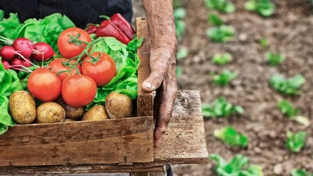 What are the Benefits of Local Organic Food