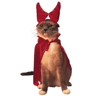 OMG - A Cat Costume...LOL