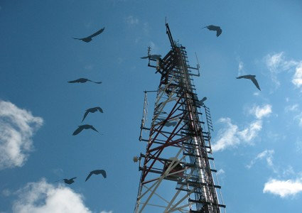 Cell Towers and Birds