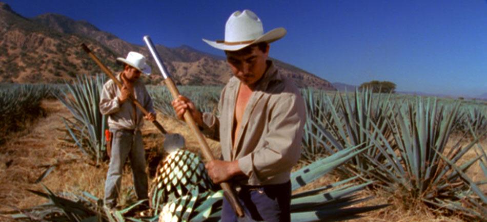 Na rota da tequila pelo México