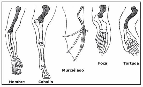 Resultado de imagen para anatomia comparada