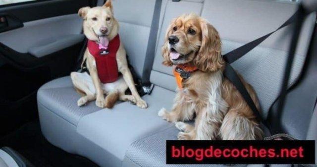 ¿Cómo transportar Animales en el Auto de Forma Correcta?