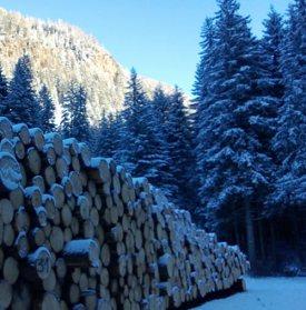 trochi legno e abeti Val di Fiemme