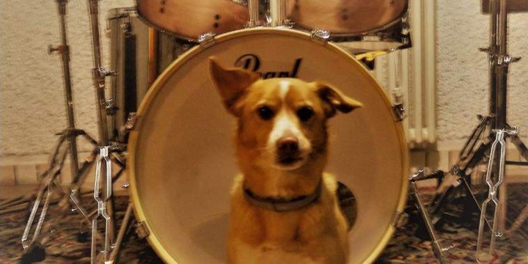 Wasichu, il cane davanti alla batteria