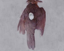 Un uccello morto in copertina del disco diChris Yan: Blasè