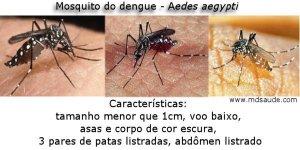 Governo federal libera quase R$ 3 milhões para combater Aedes aegypti na Paraíba