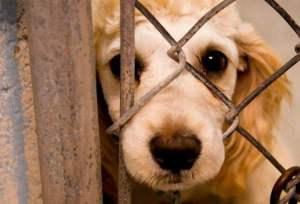 Projeto de Jefferson Kita prevê severas sanções por maus tratos a animais em Bayeux