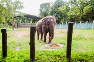 Novo parque da Bica recebe entidades de proteção animal e apresenta o bom acolhimento com elefanta Lady