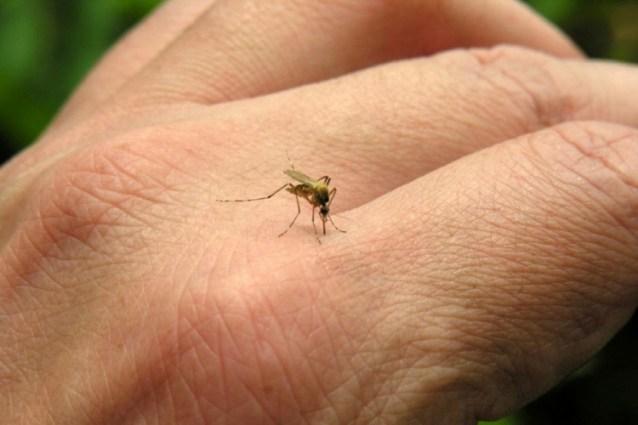 Doença transmitida pelo Aedes aegypti se tornou preocupaçao mundial - Imagem meramente ilustrativa