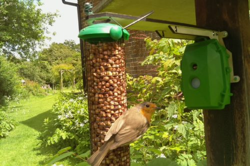 A robin on a bird feeder in a garden with a Naturebytes Wildlife Cam mounted beside it