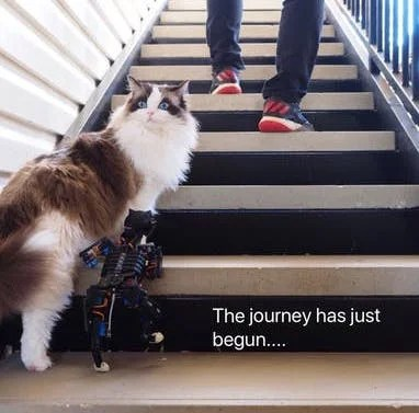 Petoi Raspberry Pi Robot Cat