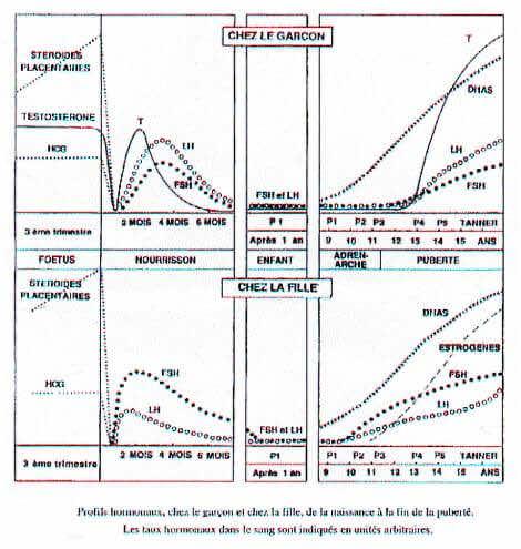 profils hormonaux de la naissance a la puberte