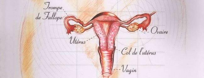 Anatomie et physiologie de l'appareil sexuel féminin