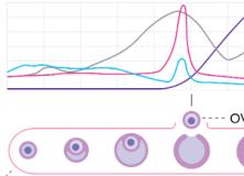 Le cycle menstruel joue un rôle dans l'excitation