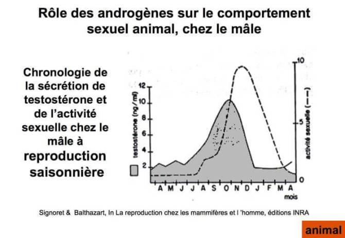 Rôle des androgènes sur le comportement sexuel animal chez le male