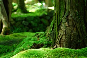 152210__wood-bark-wood-moss-green-summer_p