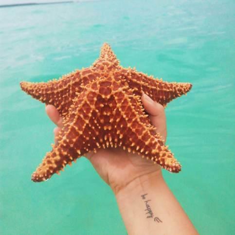 Ilha Saona_estrela do mar