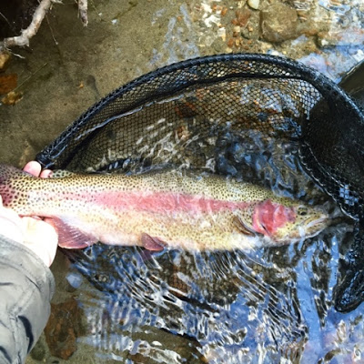Best Fly Fishing Books that Move the Needle