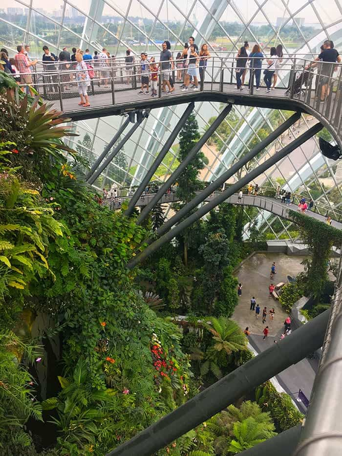 Cloud Forest Singapore
