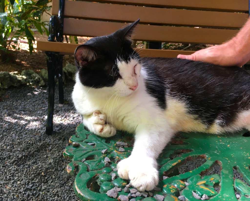 Ernest Hemingway's 6 toe cat