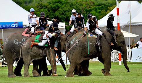 Elephant polo Thailand