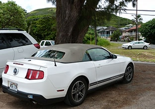 Mustang Hawaii