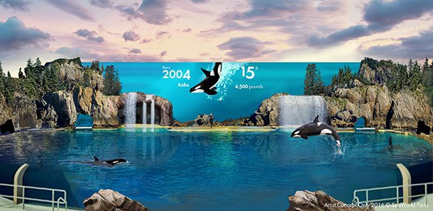 Seaworld new orca enclosure