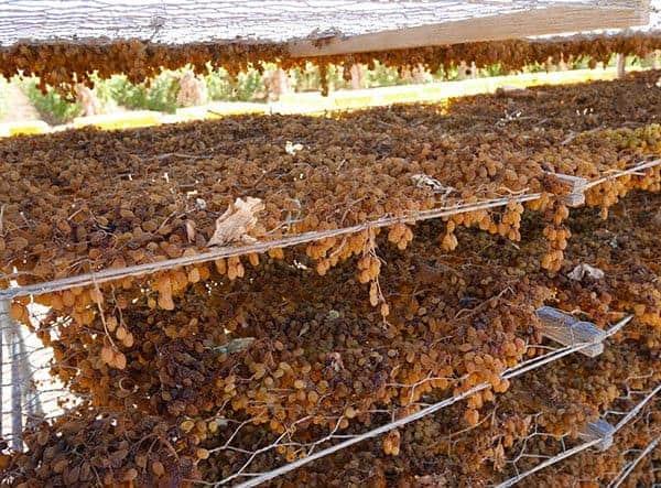 raisin racks mildura