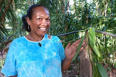 Vanilla beans New Caledonia
