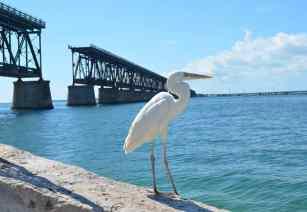 Bahai Bridge (Victoria Fellows / California Dreamers and West Coast Wanderers)