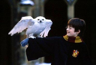 Popularidad de Harry Potter Aumenta Número de Lechuzas Abandonadas :(