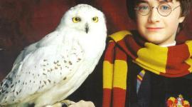 Anunciado Retiro Actoral de las Lechuzas que Interpretan a Hedwig y Errol