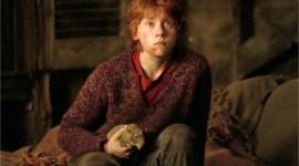 Rupert Grint revela que ya no disfruta verse en las películas de Harry Potter