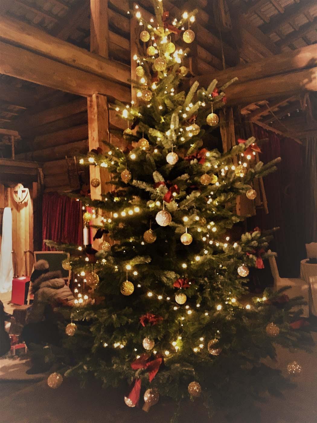 Christbaum für Weihnachten