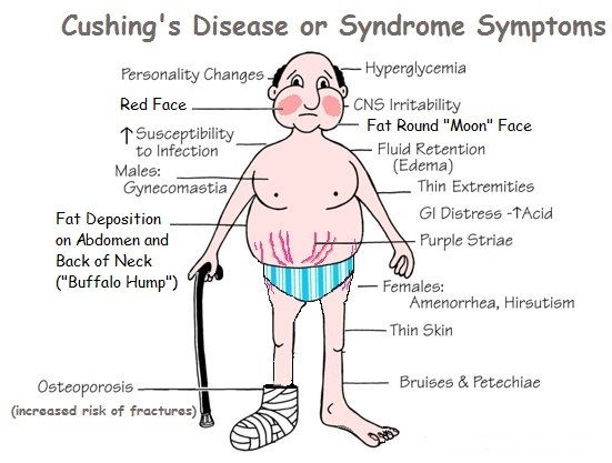 Symptoms Of Cushing S Disease In Dogs