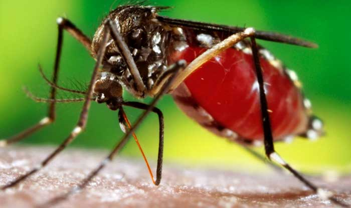 4 Common Symptoms Of Dengue Fever