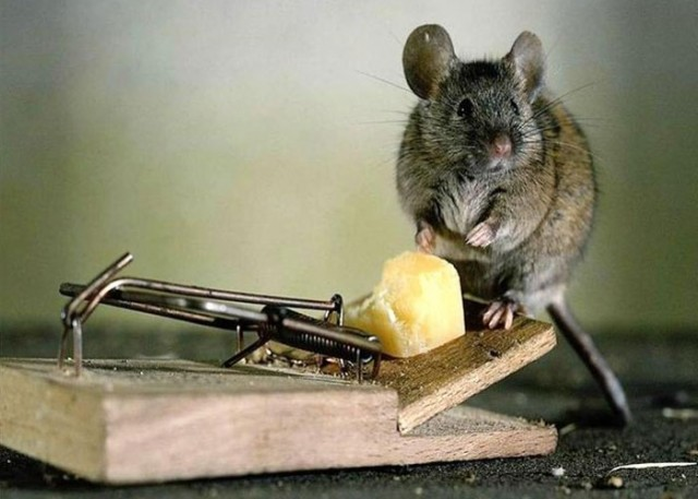 Best Ways to Get Rid of Mice Naturally