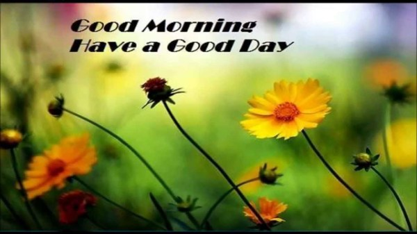 Good Morning Quotes and Messages