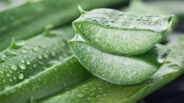 Aloe Vera for Skin Rashes