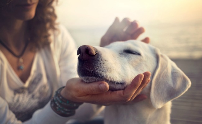8 Best Natural Home Remedies For Fleas On Dogs
