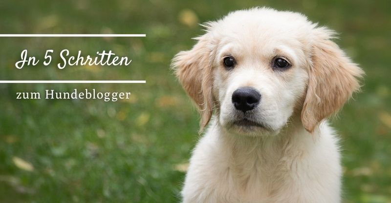 Read more about the article In 5 Schritten zum Hundeblogger